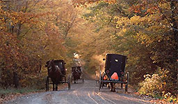 Amish Country Activities - Buggies