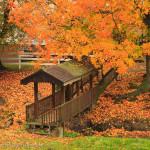 A covered bridge under a bright orange tree in fall
