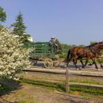 Horses pulling a wagon