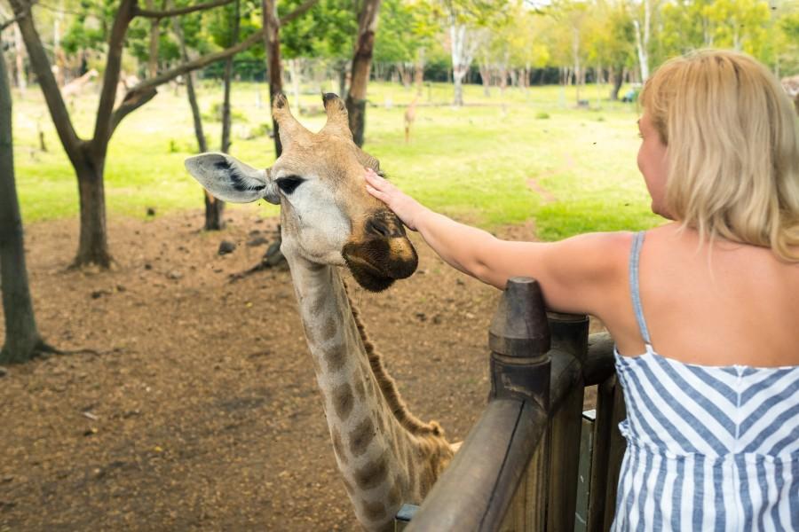 Woman petting a giraffe on a weekend getaway from Columbus