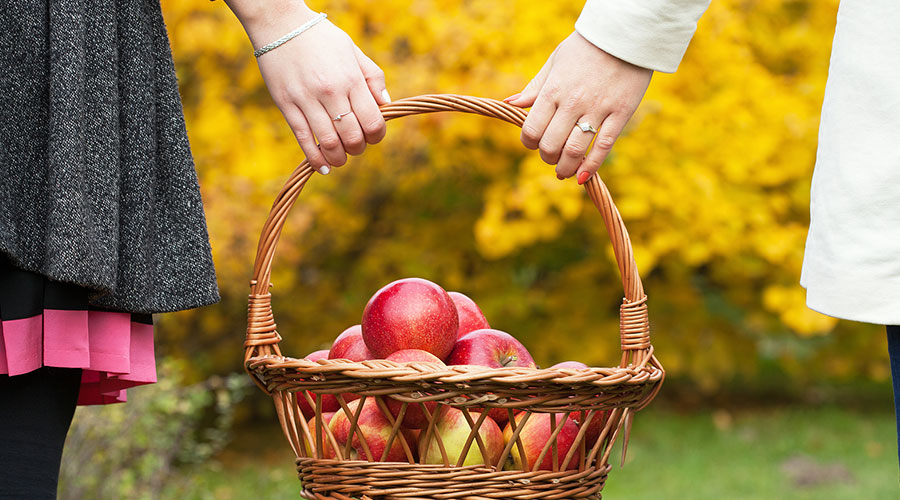 Couple apple picking on an Ohio fall getaway