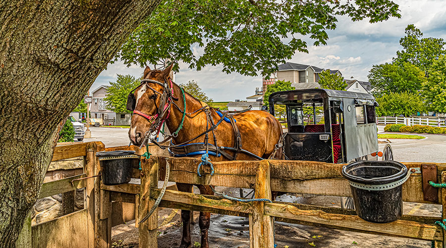 Horse-drawn Amish buggy - attraction in Ohio Amish country
